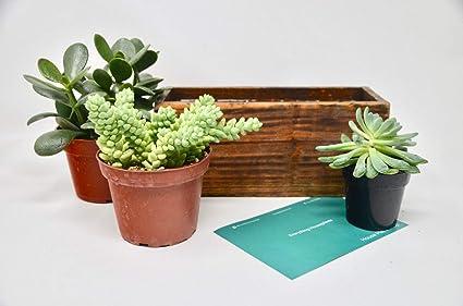 Amazon Com Diy Succulent Terrarium Kit Wooden Planter 3