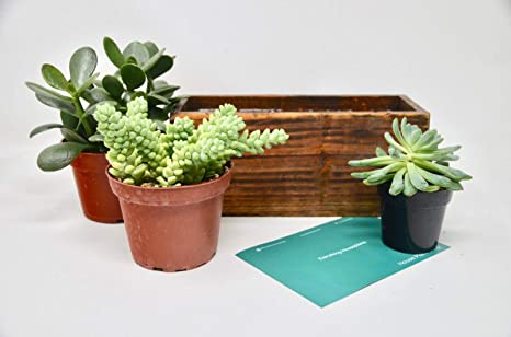 Amazon Com Diy Succulent Terrarium Kit Wooden Planter