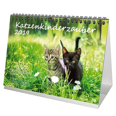 Gato mágica infantil · DIN A5 · Premium mesa/Calendario 2019 · gato Niño · gato bebé · Gatos · Stube Tiger ...