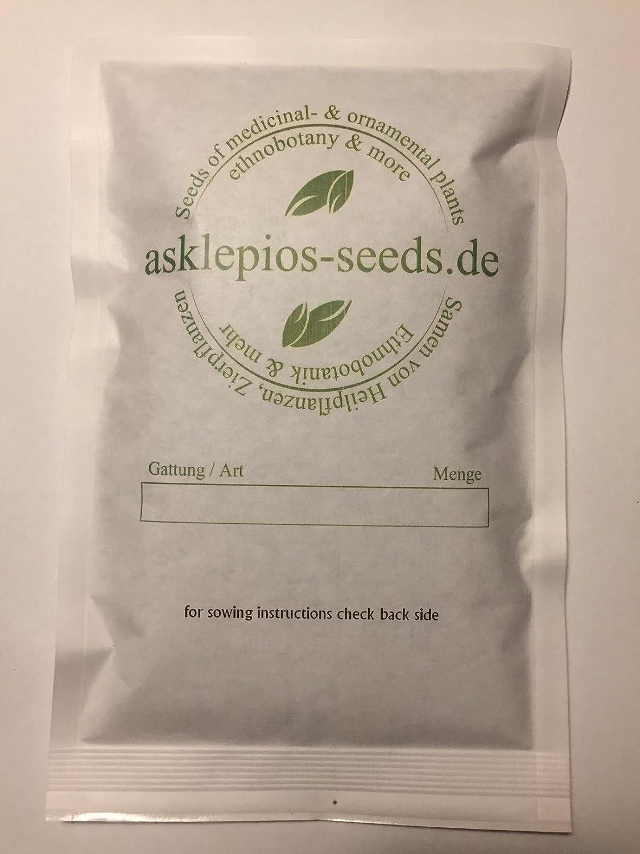 Asklepios-seeds® - 10 seeds Mandragora autumnalis, mandrake, autumn mandrake