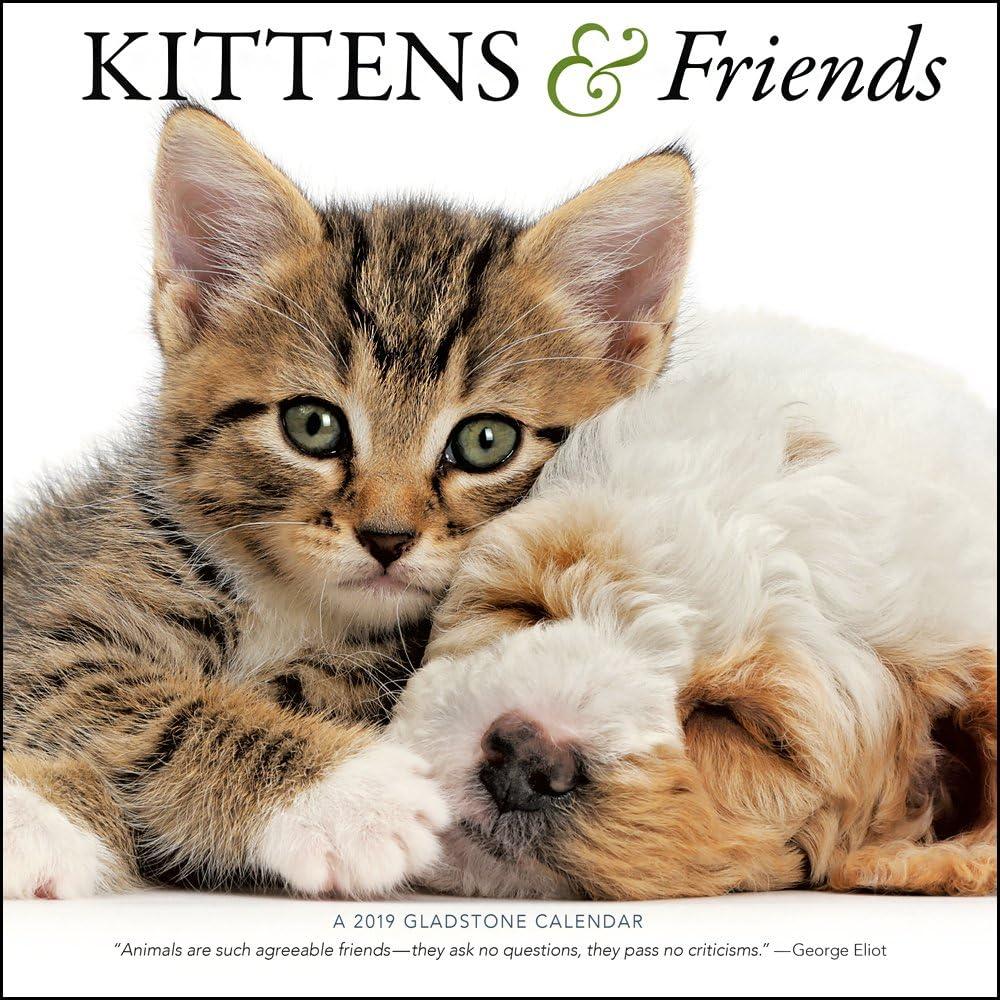 2019 - Calendario de pared para gatitos y amigos: Amazon.es: Oficina y papelería