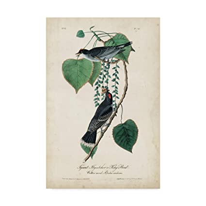 Amazon.com: Trademark Fine Art Flycatcher and King Bird by ...