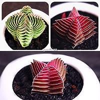 Portal Cool # 01: 100 piezas suculentas Semillas Lithops piedras vivas raras plantas de cactus Inicio Plantas GSC
