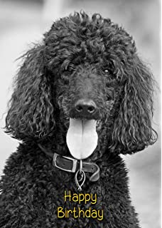 Poodle Dog Birthday Card 8x55 Mix Match On 8