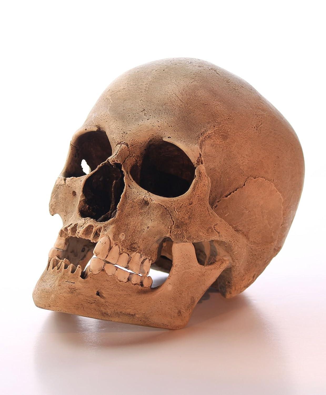 Schädel Totenschädel Gothik Totenkopf anatomisch lebensecht Unterkiefer