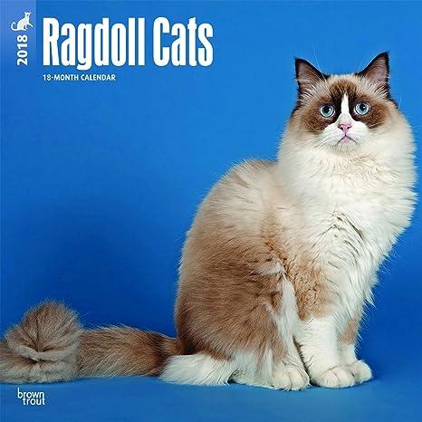 Calendario 2018 Gatto Ragdoll Gatto Di Razza Gattini In