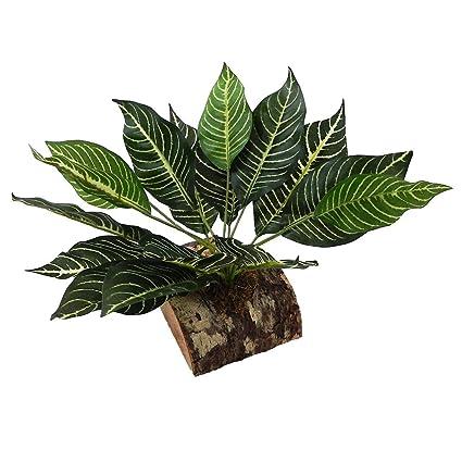 Amazon Com Tropical Terrace Large Zebra Leaf Terrarium Plant Pet