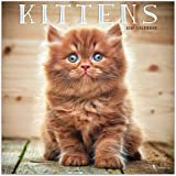 Calendario Gatitos 2019 - 2019 Kittens Wall Calendar