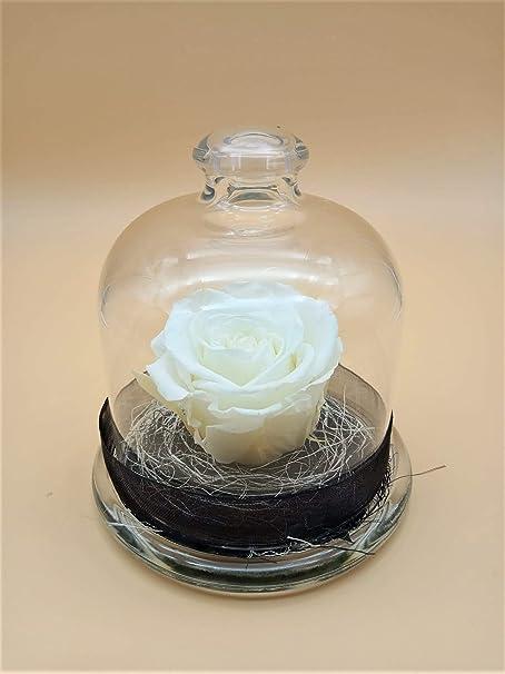almaflor Rosa eterna preservada Blanca Cúpula de Cristal con Rosa eterna Natural, sobre Base de sisal. Rosa preservada Natural Blanca. Hecho en España.: Amazon.es: Hogar