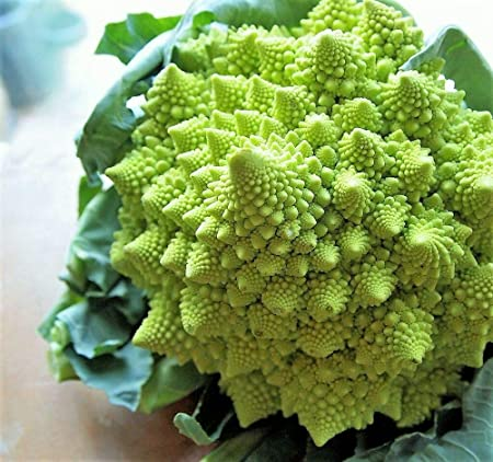 Amazon.com : 500 Organic ROMANESCO Broccoli Broccoflower ...