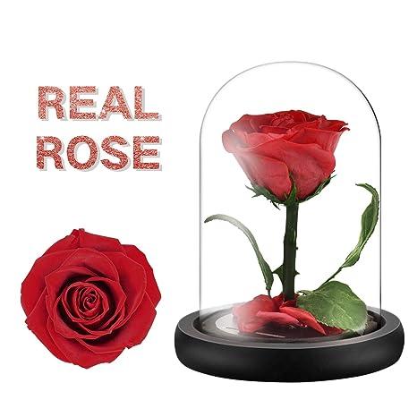 Amazon.com: Rosa real moxuan, rosa de la bestia en cristal ...