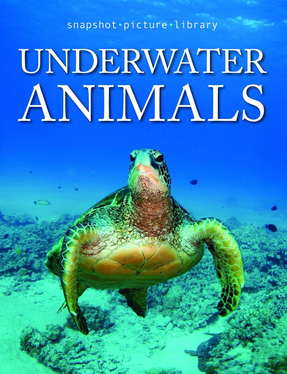 Snapshot Picture Library Underwater Animals