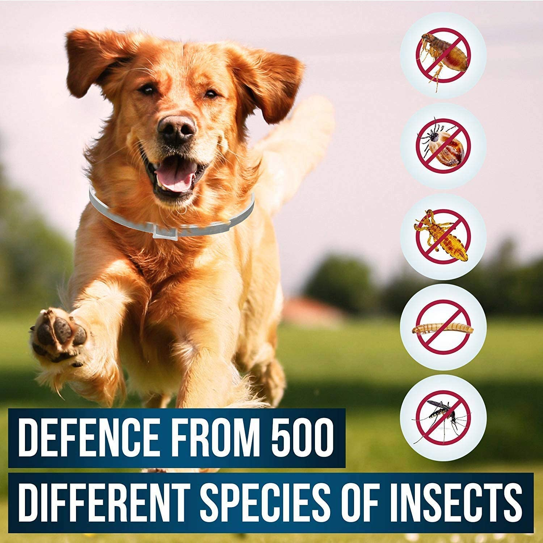 Collier anti-puces pour chien
