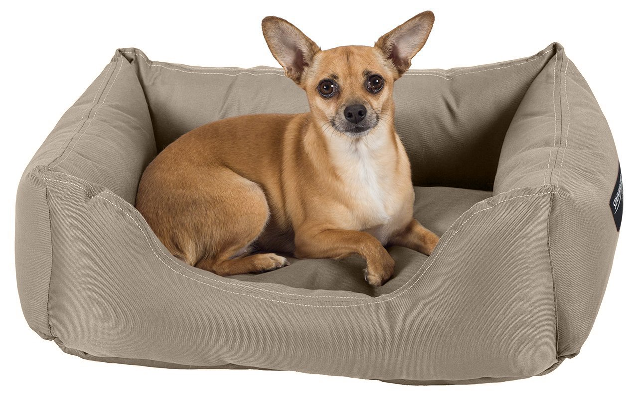 Amazon : STAINMASTER Comfy Couch Pet Bed, Small 26-By-19 Inch, Khaki,  Khaki : Pet Supplies