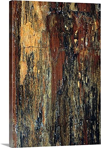 Petrified Wood Canvas Wall Art Print