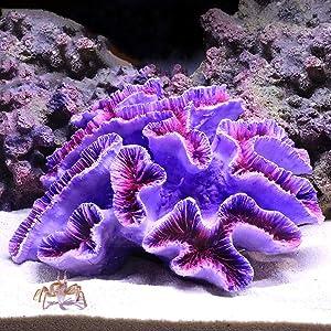 "Danmu 1Pc of Polyresin Coral Ornaments, Aquarium Coral Decor for Fish Tank Aquarium Decoration 6 2/5"" x 5 1/2"" x 2 7/10"""