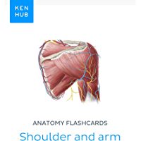 Anatomy flashcards: Shoulder and arm: Learn all bones, ligaments and muscles on the go (Kenhub Flashcards Book 22…