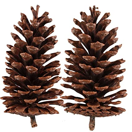 natural pine cones ifoyo 2 pieces large pine cones christmas tree decorations unscented crafts home - Decorating Large Pine Cones For Christmas