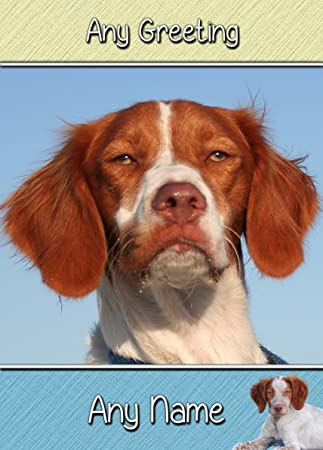 Brittany Dog Birthday Card 8x6 Mix Match On 8x6 Cards Any 3 For