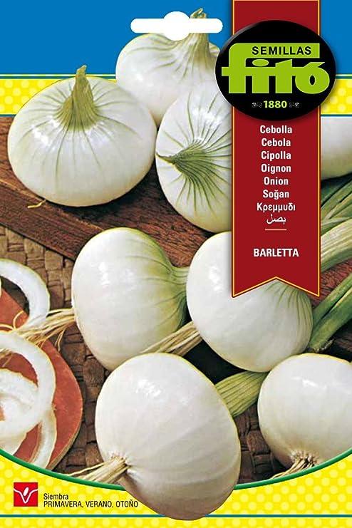 Semillas Fitó 41 - Semillas de Cebolla Barletta: Amazon.es: Jardín