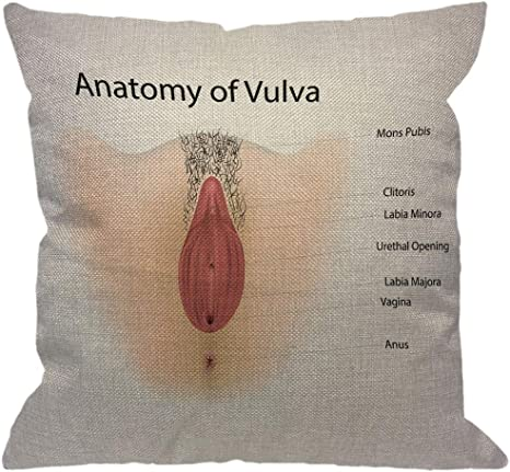 Amazon Com Hgod Designs Anatomy Of Vulva Throw Pillow Cover Female Vagina Urethra Clitoris Labiaminora Anus Reproductive System Decorative Pillow Cases Linen Square Cushion Covers For Home Sofa Couch 18x18 Inch Home Kitchen