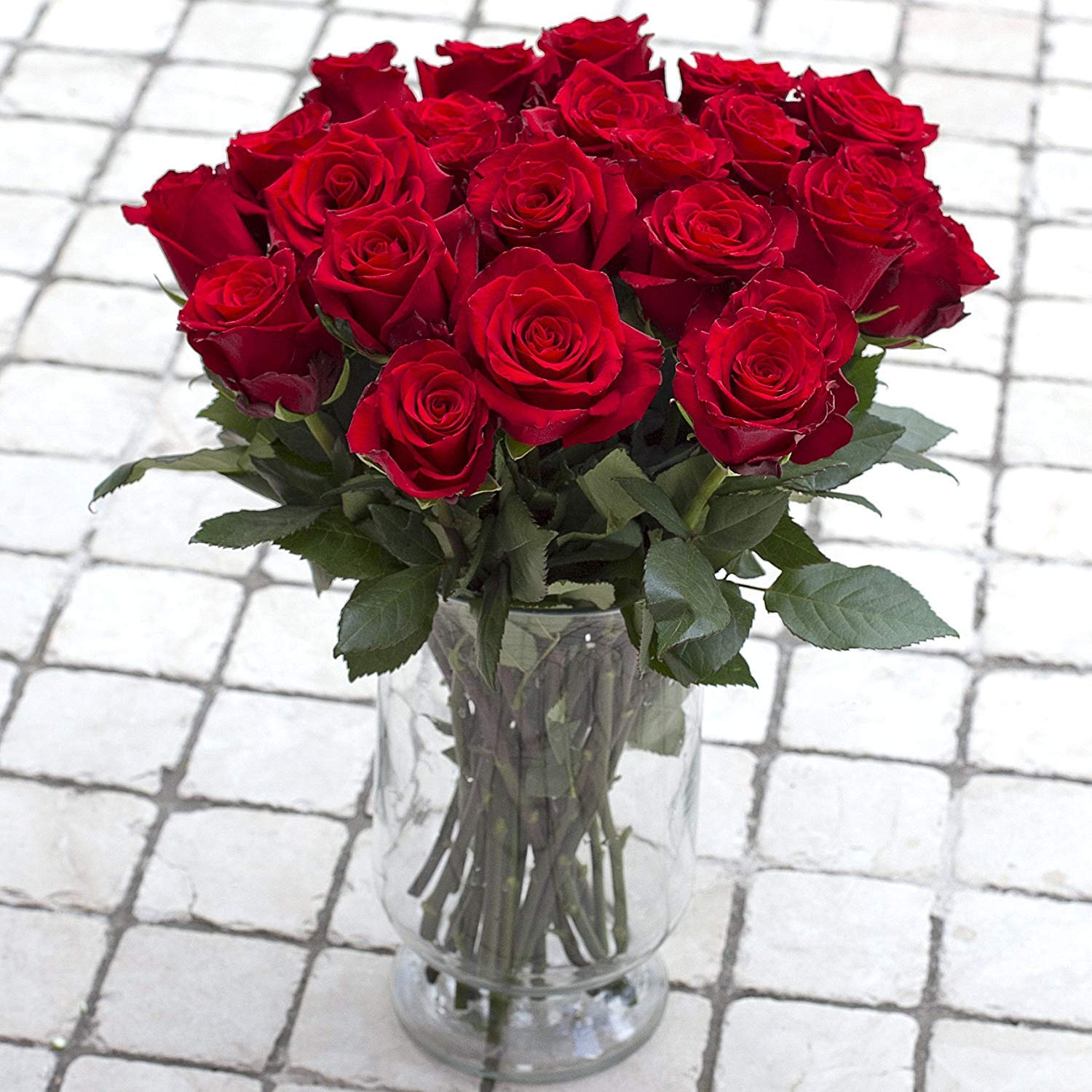 Green Choice Flowers - 24 (2 Dozen) Premium Red Fresh Roses with 20 inch Long Stem Farm Fresh Flowers Beautiful Red Rose Flower Cut Per Order Direct from Farm Fast Free Delivery Long Lasting by Greenchoiceflowers (Image #3)