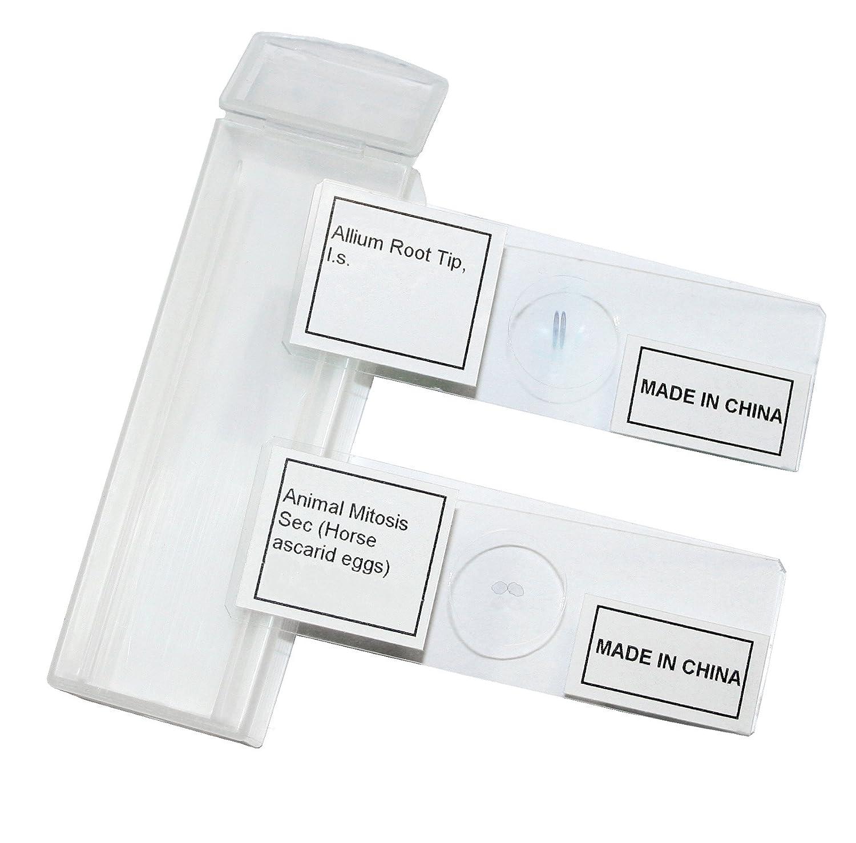 Package Meiosis /& Mitosis Set of 9 Vision Scientific VSH130 Prepared Slide Set