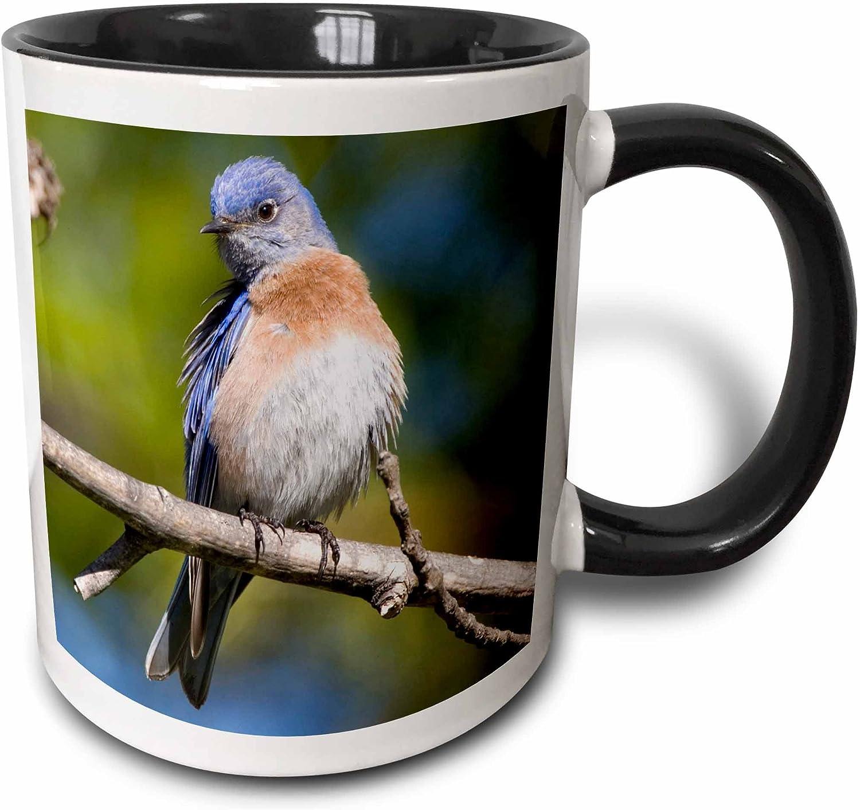 Amazon Com 3drose California San Diego Western Bluebird Us05 Djo0073 Diane Johnson Two Tone Mug 11 Oz Black White Kitchen Dining