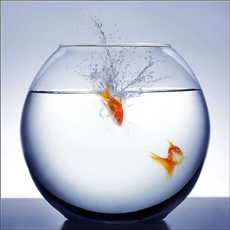 Pro-Art-Bilderpalette gla495d Diving Fish - Cuadro de cristal (20 x 20