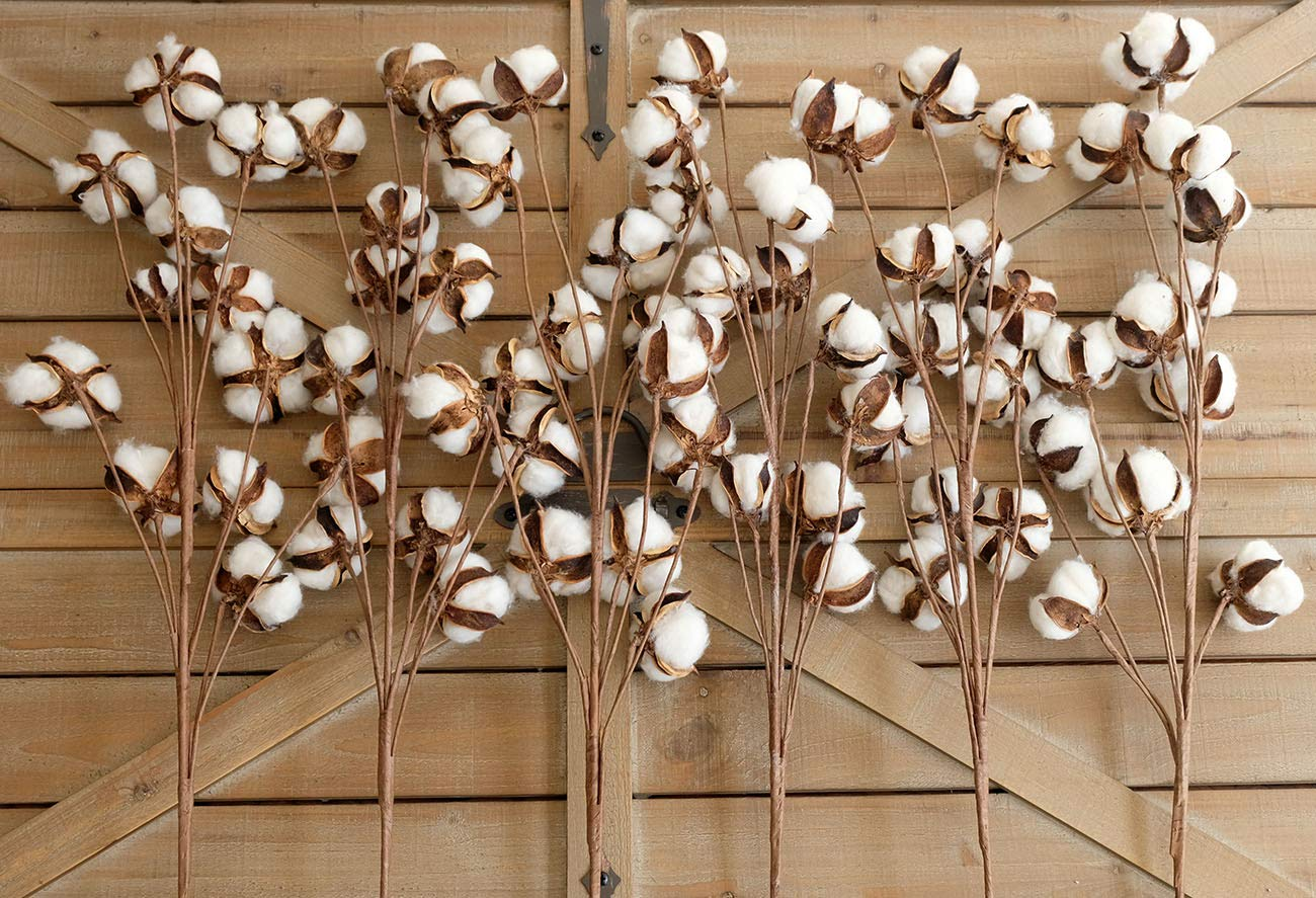 idyllic Pack of 6 Cotton Stems – 31 Inches Tall – 12 Cotton Bolls Per Stem Real Elastic Cotton Stalk Rustic Floral for Home Decor Wedding Centerpiece Farmhouse Style