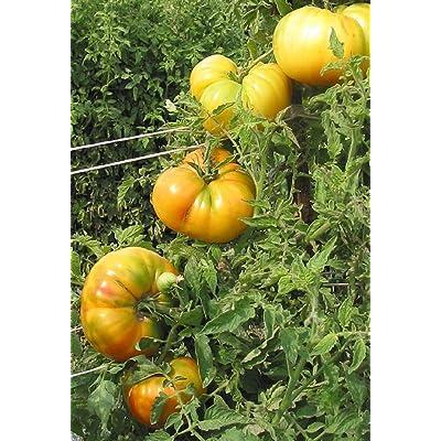 Hawaiian Pineapple Tomato Seeds (20 Seed Pack) : Garden & Outdoor