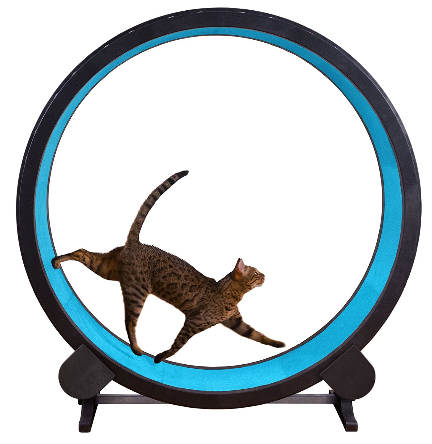 One Fast Cat Exercise Wheel - Blue