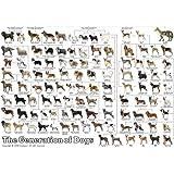 3000ピース ジグソーパズル 究極 パズルの達人 ペット コレクション 犬の系統図2 スモールピース(73x102cm)