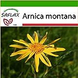 SAFLAX - Árnica - 40 semillas - Con sustrato - Arnica montana