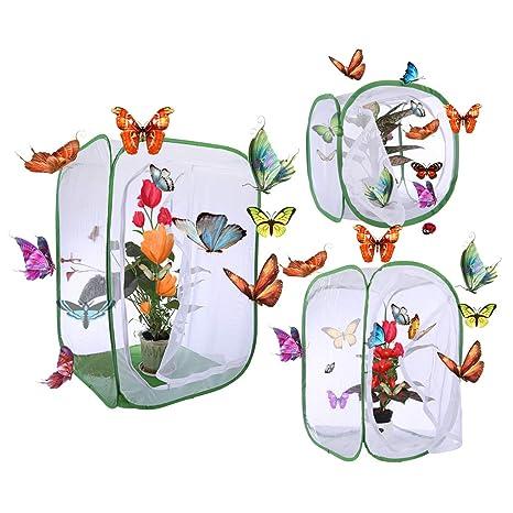 POXL - Jaula de hábitat de Insectos con Mariposas (3 Unidades ...
