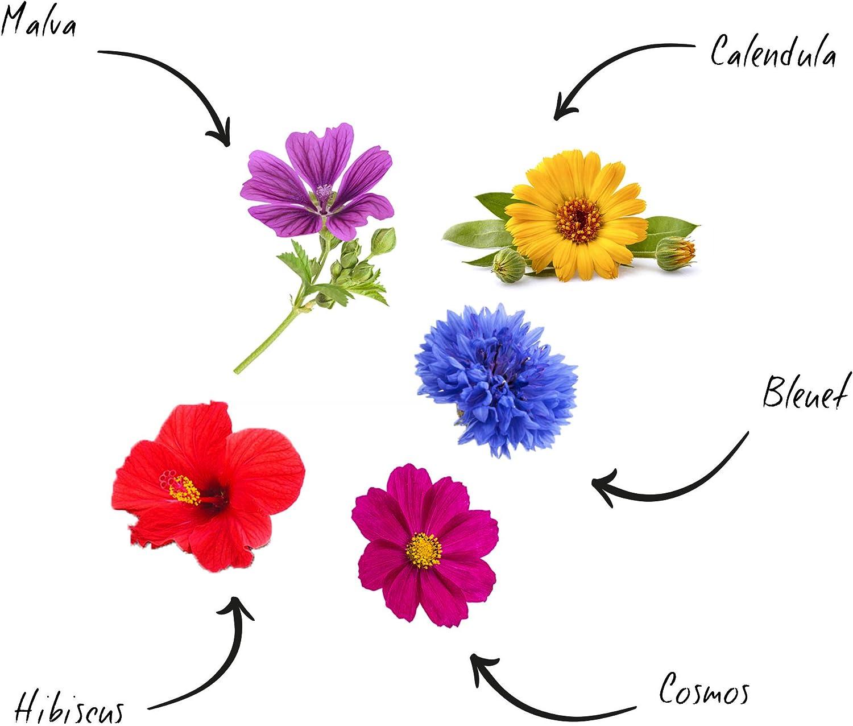 Cultivea – Mini Kit Huerto de Flores Comestibles – 100% Semillas ...