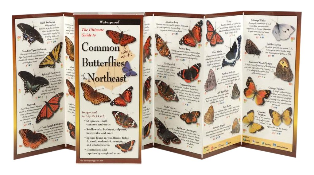 Common Butterflies of the Northeast (Foldingguides)