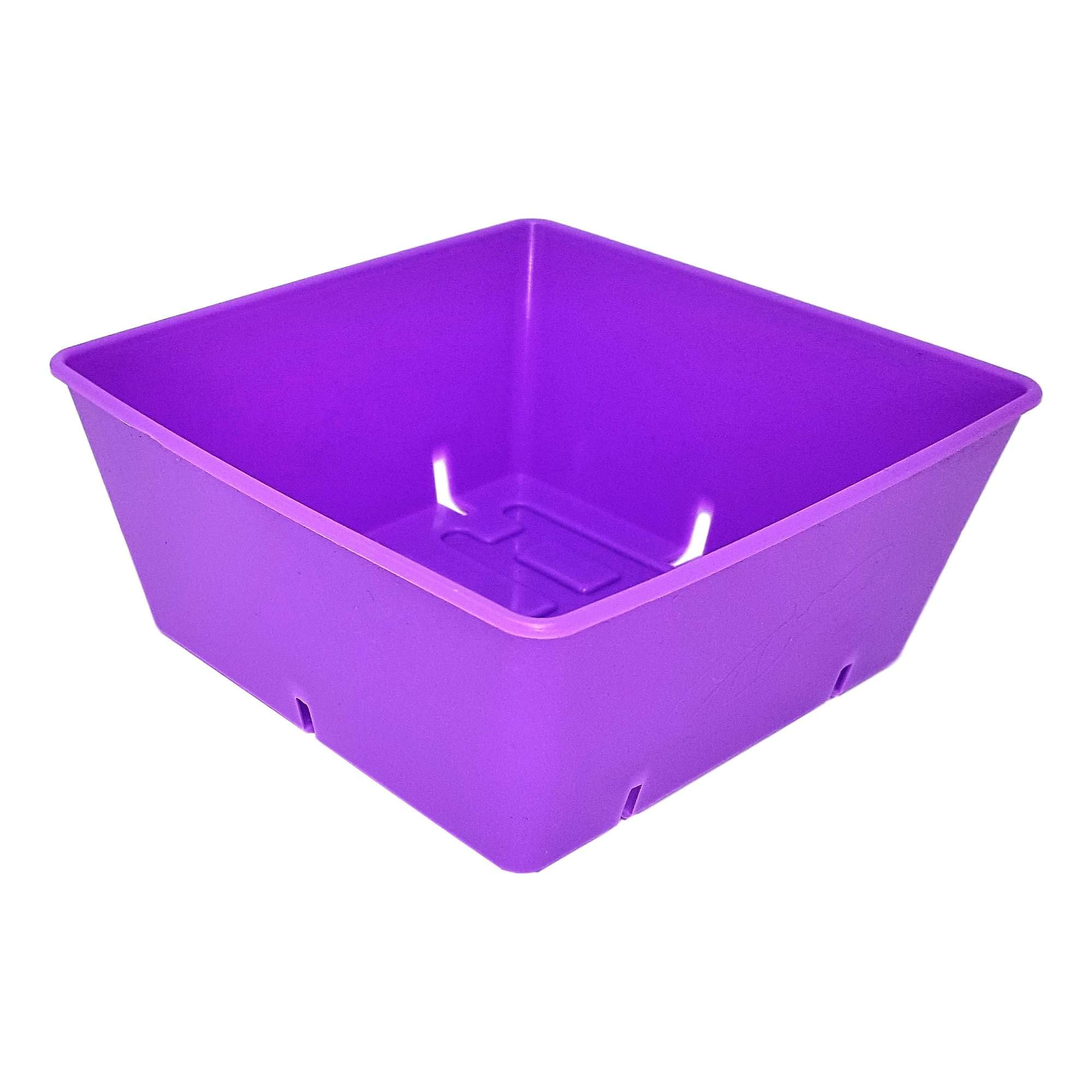 5x5 Seed Tray Purple - 80 Pack - Extra Strength 5 x 5 Inserts Grow Microgreens, Wheatgrass Seeds, Fodder 1020 System 801 Trays by Bootstrap Farmer