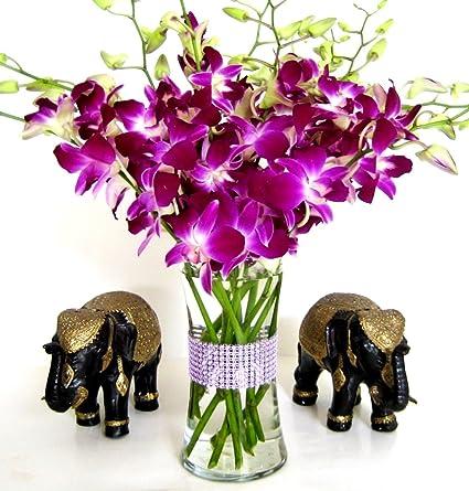 Amazon Com Fancy Flowers Usa Only Jazi Purple