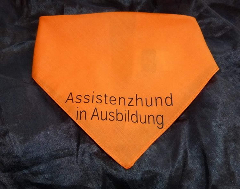 Hundehalstuch Assistenzhund in Ausbildung