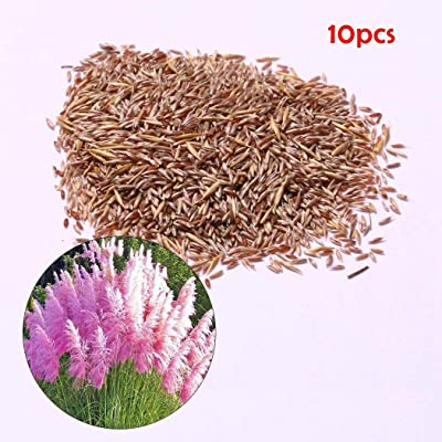 Gfones Colorful Pampas Grass Seeds Home Garden DIY Plants Easy Grow Dresses: Clothing