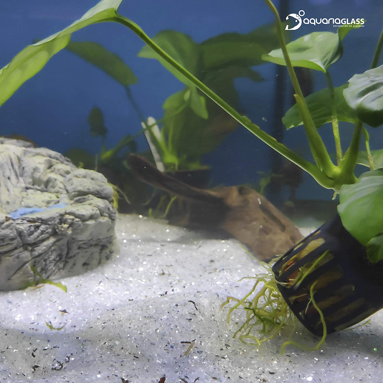 Aquariaglass Silver Arena de Vidrio para decoración de acuarios, peceras y terrarios 2 kg Cristal Color Gris Brillante: Amazon.es: Productos para mascotas
