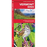 Vermont Birds: A Folding Pocket Guide to Familiar Species (Wildlife and Nature Identification)