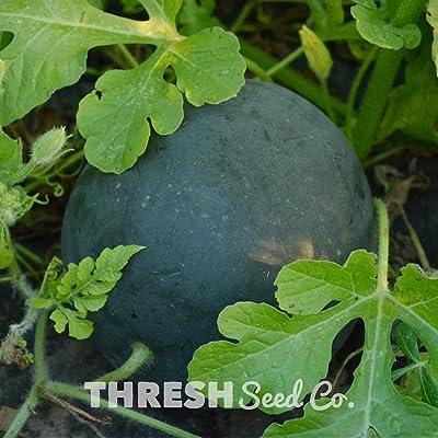 Sugar Baby Watermelon - 25 Seeds : Garden & Outdoor