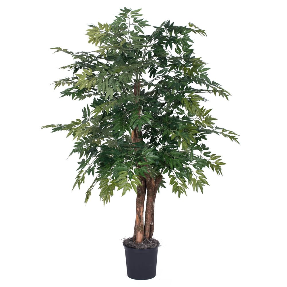 Vickerman TBU0640-06 Ming Aralia Bush, 4', Green 4'