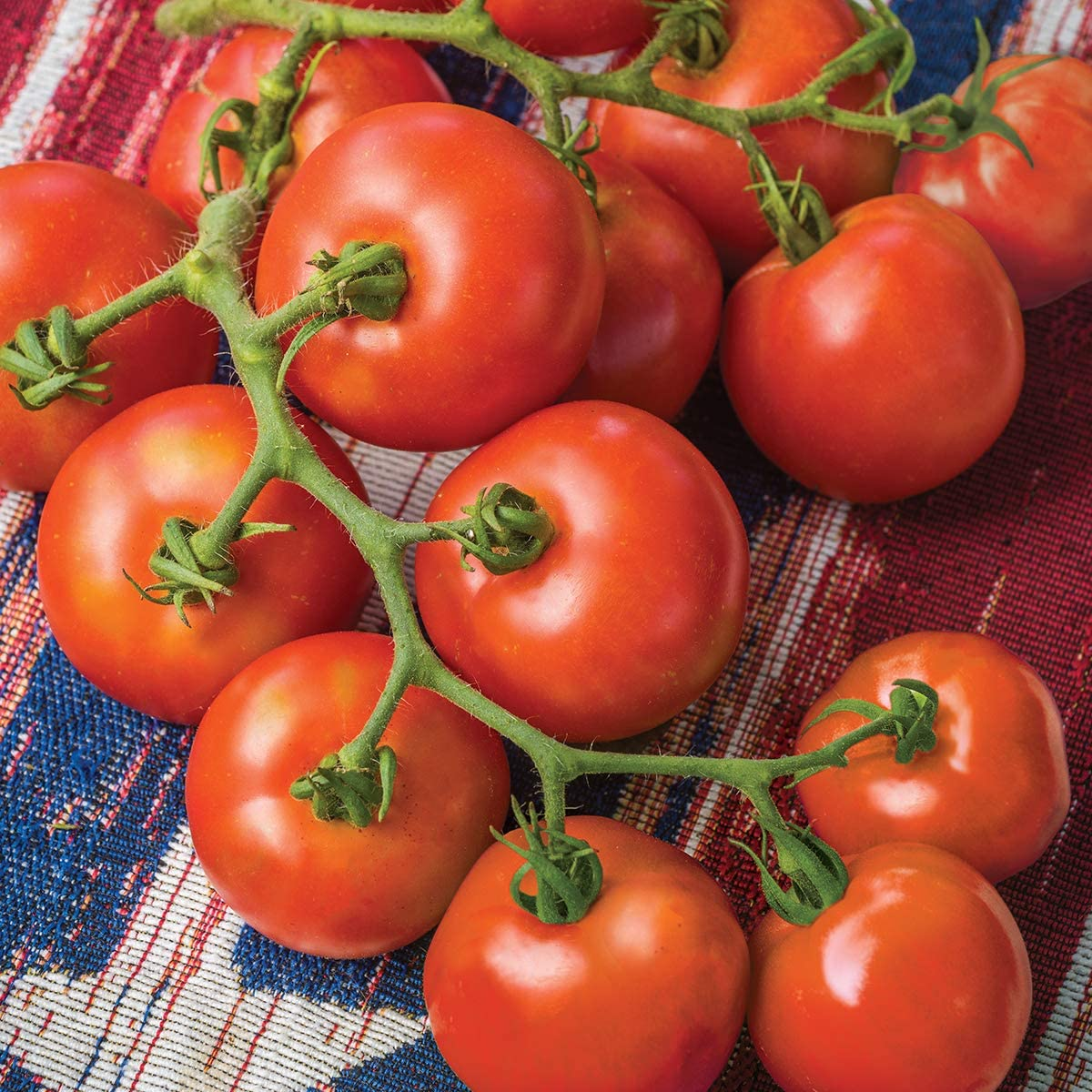 Amazon Com Burpee Fourth Of July Hybrid Red Slicing Tomato 50 Seeds Garden Outdoor