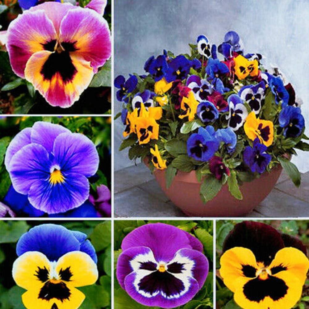 Semillas de Pensamiento, 100 piezas de semillas de Pensamiento para el hogar, jardín, bonsái, viola tricolor y decoración de flores, Pensy Seeds