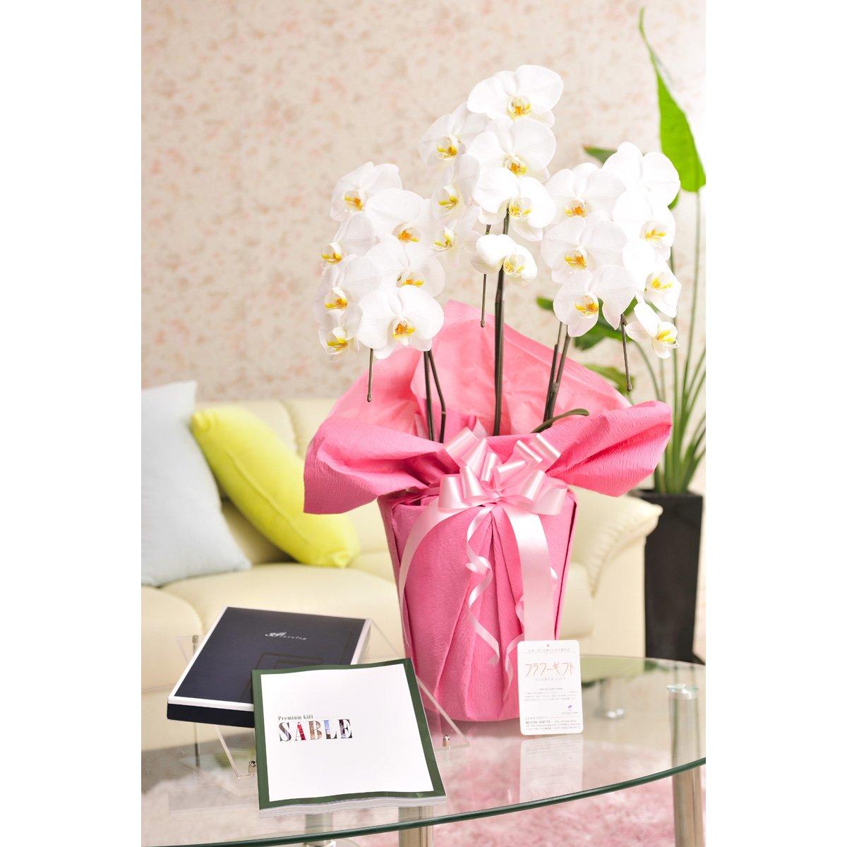 花とギフトのセット 胡蝶蘭 大輪3本立とカタログギフト(ミストラル/セーブル) B07DTDGJFG
