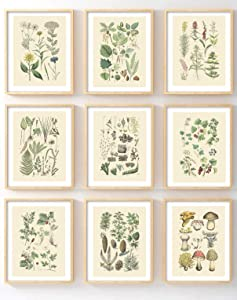 Ink Inc Botanical Prints Woodland Plants Set of 9 5x7 Home Decor Wall Art Wildflower Mushrooms Fern Trees Berries