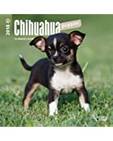 Chihuahua Puppies 2018 7 x 7 Inch Monthly Mini Wall Calendar, Animals Small Dog Breeds Puppies (Multilingual Edition)